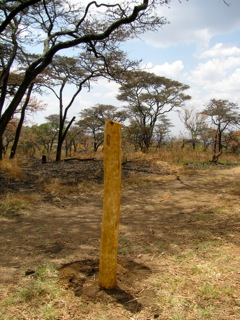 the 1st fence post in the ground